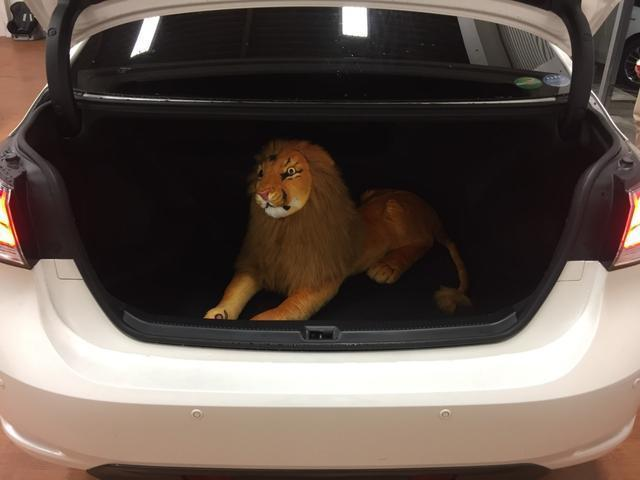 105cmのライオンも軽々入ります!