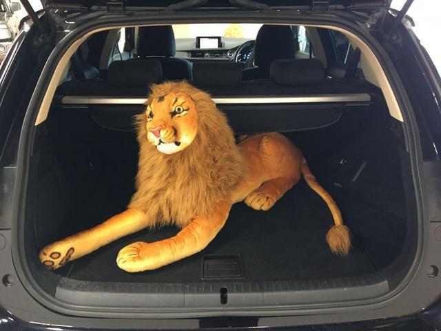 105cmのライオンも楽々入ります♪