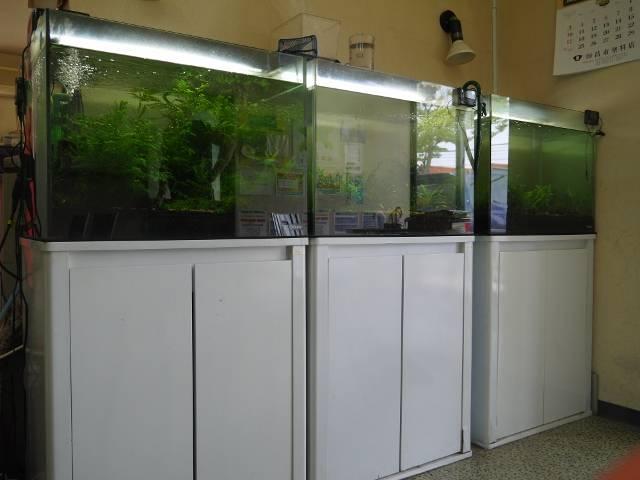 待合室には観賞用シュリンプなどを設置しております☆