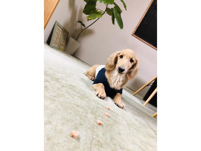 看板犬のシェル君がお客様をお出迎えします(^-^)