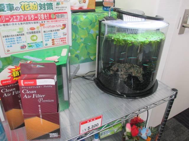 ★かわいい熱帯魚もいますよ~★
