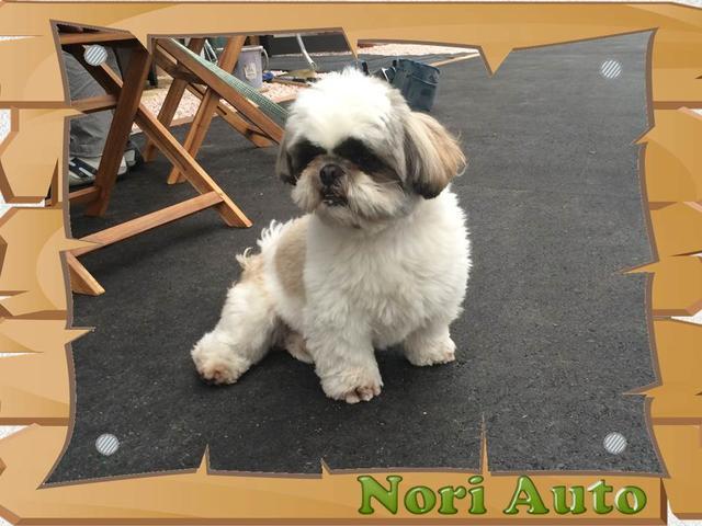 (株)Nori Auto(3枚目)