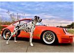インスタ映え 看板犬と愛車で記念撮影