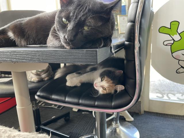 クマもいます。 大小の親子クマがいます。  喋れませんが、クマ店長と呼んでいます