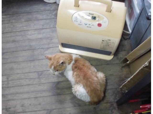 当店の看板猫です♪