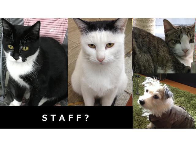 スタッフよりも多い動物たち。地域猫活動も応援します。