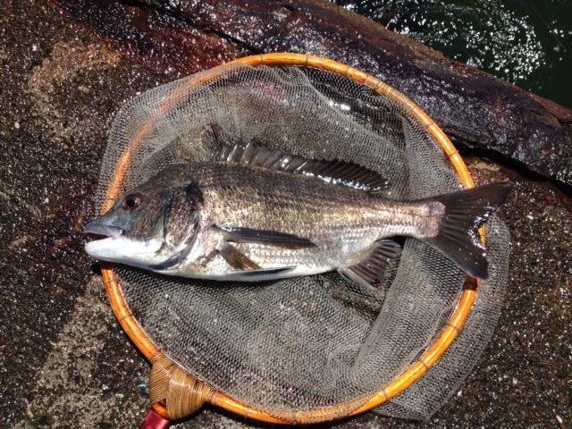 「落とし込み」この釣りを始めて30年以上?8月には「釣りごろ・・・」にも出演しました。