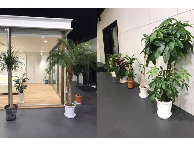 癒されたい!そんな時こそMarverousに♪観葉植物は素敵です!居心地の良い空間設計に拘ってます☆