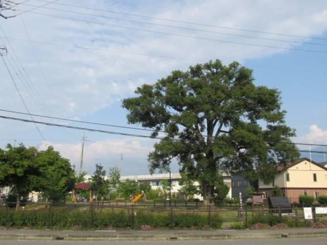 展示場は天然記念物「稲田のエノキ」の稲田エノキ公園目の前に有ります。お子様の時間つぶしにもぜひ☆