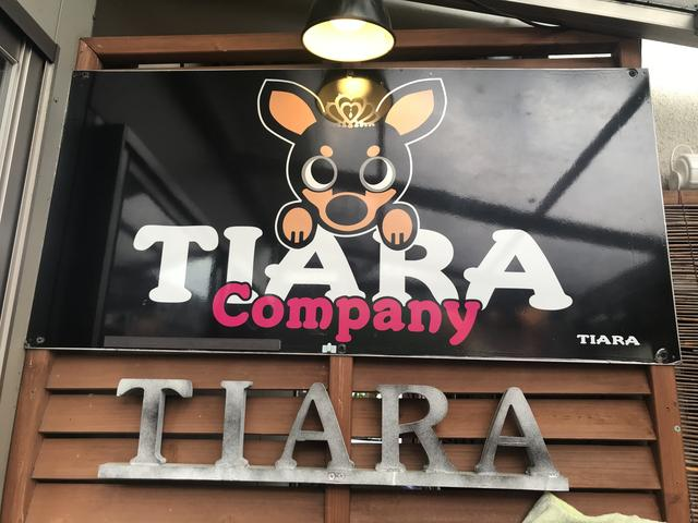 TIARA company(5枚目)