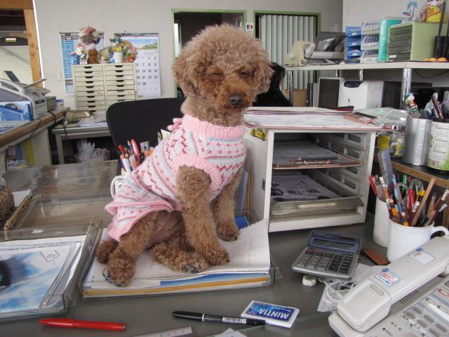 役職 看板犬  名前 モコ