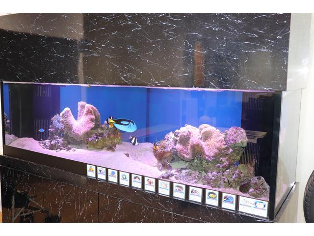 お客様を退屈させない楽しいこだわりの180cm大型海水魚水槽もございます!お子様も喜びますよ!